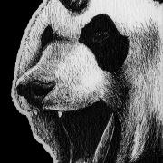 panda, pandas, unicorn, unicorns, mythical creature, mythical creatures, original creature, original creatures, fantasy, panda bear, panda bears, ink, inks, pen, pens, ballpoint pen, ballpoint pens, realism, realistic, animal, animals, wildlife, nature, achromatic, black and white, black, white, grey, gray, noelle, noelle brooks, noellebrooks, noelle m brooks, noellembrooks, art, series, drawing, drawings, picture, pictures, illustration, illustrations, portrait, portraits