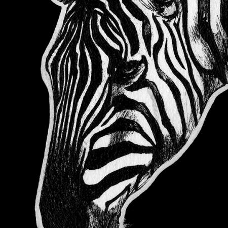zebra, zebras, plains zebra, face, close-up, close up, profile, side, ink, inks, pen, pens, ballpoint pen, ballpoint pens, realism, realistic, animal, animals, wildlife, nature, achromatic, black and white, black, white, grey, gray, noelle, noelle brooks, noellebrooks, noelle m brooks, noellembrooks, art, series, drawing, drawings, picture, pictures, illustration, illustrations, portrait, portraits