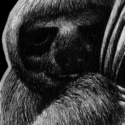 pygmy three-toed sloth, pygmy sloth, three-toed sloth, sloth, sloths, resting, lying down, face, front, frontal, close-up, close up, ink, inks, pen, pens, ballpoint pen, ballpoint pens, realism, realistic, animal, animals, wildlife, nature, achromatic, black and white, black, white, grey, gray, noelle, noelle brooks, noellebrooks, noelle m brooks, noellembrooks, art, series, drawing, drawings, picture, pictures, illustration, illustrations, portrait, portraits