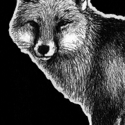 red fox, fox, foxes, Anatolian fox, walking, standing, full body, full-body, ink, inks, pen, pens, ballpoint pen, ballpoint pens, realism, realistic, animal, animals, wildlife, nature, achromatic, black and white, black, white, grey, gray, noelle, noelle brooks, noellebrooks, noelle m brooks, noellembrooks, art, series, drawing, drawings, picture, pictures, illustration, illustrations, portrait, portraits