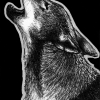 red wolf, wolf, wolves, howling, mouth open, side, profile, ink, inks, pen, pens, ballpoint pen, ballpoint pens, realism, realistic, animal, animals, wildlife, nature, achromatic, black and white, black, white, grey, gray, noelle, noelle brooks, noellebrooks, noelle m brooks, noellembrooks, art, series, drawing, drawings, picture, pictures, illustration, illustrations, portrait, portraits