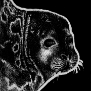 saimaa seal, ringed seal, seal, side, profile, lying down, ink, inks, pen, pens, ballpoint pen, ballpoint pens, realism, realistic, animal, animals, wildlife, nature, achromatic, black and white, black, white, grey, gray, noelle, noelle brooks, noellebrooks, noelle m brooks, noellembrooks, art, series, drawing, drawings, picture, pictures, illustration, illustrations, portrait, portraits