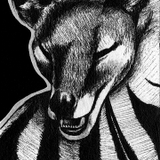 thylacine, extinct, marsupial, curled up, lying down, sleeping, mouth open, teeth, eyes closed, asleep, ink, inks, pen, pens, ballpoint pen, ballpoint pens, realism, realistic, animal, animals, wildlife, nature, achromatic, black and white, black, white, grey, gray, noelle, noelle brooks, noellebrooks, noelle m brooks, noellembrooks, art, series, drawing, drawings, picture, pictures, illustration, illustrations, portrait, portraits