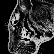 tiger, tigers, amur tiger, side, profile, face, close-up, close up, ink, inks, pen, pens, ballpoint pen, ballpoint pens, realism, realistic, animal, animals, wildlife, nature, achromatic, black and white, black, white, grey, gray, noelle, noelle brooks, noellebrooks, noelle m brooks, noellembrooks, art, series, drawing, drawings, picture, pictures, illustration, illustrations, portrait, portraits