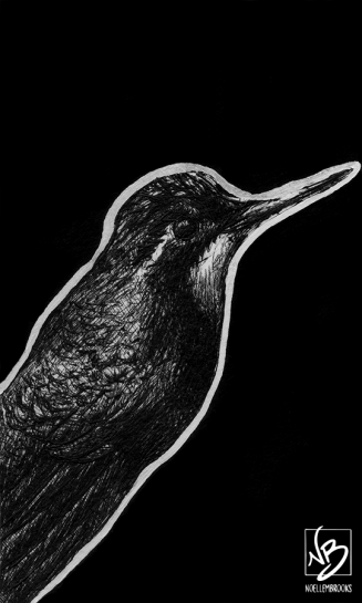 white bellied mountain gem, white bellied mountain gems, mountain gem, mountain gems, bird, birds, ink, inks, pen, pens, ballpoint pen, ballpoint pens, realism, realistic, animal, animals, wildlife, nature, achromatic, black and white, black, white, grey, gray, noelle, noelle brooks, noellebrooks, noelle m brooks, noellembrooks, series, drawings, pictures, portrait, portraits