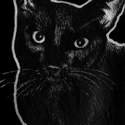 cat, cats, kitty, kitties, kitty cat, kittycat, kitty-cat, pet, pets, lying down, face, front, frontal, resting, close-up, close up, ink, inks, pen, pens, ballpoint pen, ballpoint pens, realism, realistic, animal, animals, wildlife, nature, achromatic, black and white, black, white, grey, gray, noelle, noelle brooks, noellebrooks, noelle m brooks, noellembrooks, art, series, drawing, drawings, picture, pictures, illustration, illustrations, portrait, portraits