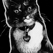 cat, cats, kitty, kitties, kitty-cat, kittycat, sitting down, front, frontal, face, pet, pets, ink, inks, pen, pens, ballpoint pen, ballpoint pens, realism, realistic, animal, animals, wildlife, nature, achromatic, black and white, black, white, grey, gray, noelle, noelle brooks, noellebrooks, noelle m brooks, noellembrooks, art, series, drawing, drawings, picture, pictures, illustration, illustrations, portrait, portraits
