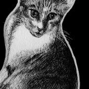 cat, cats, kitty, kitties, kittycat, kitty cat, kitty-cat, pet, pets, sitting down, curled up, face, full body, full-body, ink, inks, pen, pens, ballpoint pen, ballpoint pens, realism, realistic, animal, animals, wildlife, nature, achromatic, black and white, black, white, grey, gray, noelle, noelle brooks, noellebrooks, noelle m brooks, noellembrooks, art, series, drawing, drawings, picture, pictures, illustration, illustrations, portrait, portraits