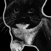 cat, cats, kitty, kitties, kittycat, kitty cat, kitty-cat, pet, pets, lying down, front, frontal, face, ink, inks, pen, pens, ballpoint pen, ballpoint pens, realism, realistic, animal, animals, wildlife, nature, achromatic, black and white, black, white, grey, gray, noelle, noelle brooks, noellebrooks, noelle m brooks, noellembrooks, art, series, drawing, drawings, picture, pictures, illustration, illustrations, portrait, portraits