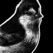 yellow tit, yellow tits, tit, tits, bird, birds, ink, inks, pen, pens, ballpoint pen, ballpoint pens, realism, realistic, animal, animals, wildlife, nature, achromatic, black and white, black, white, grey, gray, noelle, noelle brooks, noellebrooks, noelle m brooks, noellembrooks, series, drawings, pictures, portrait, portraits