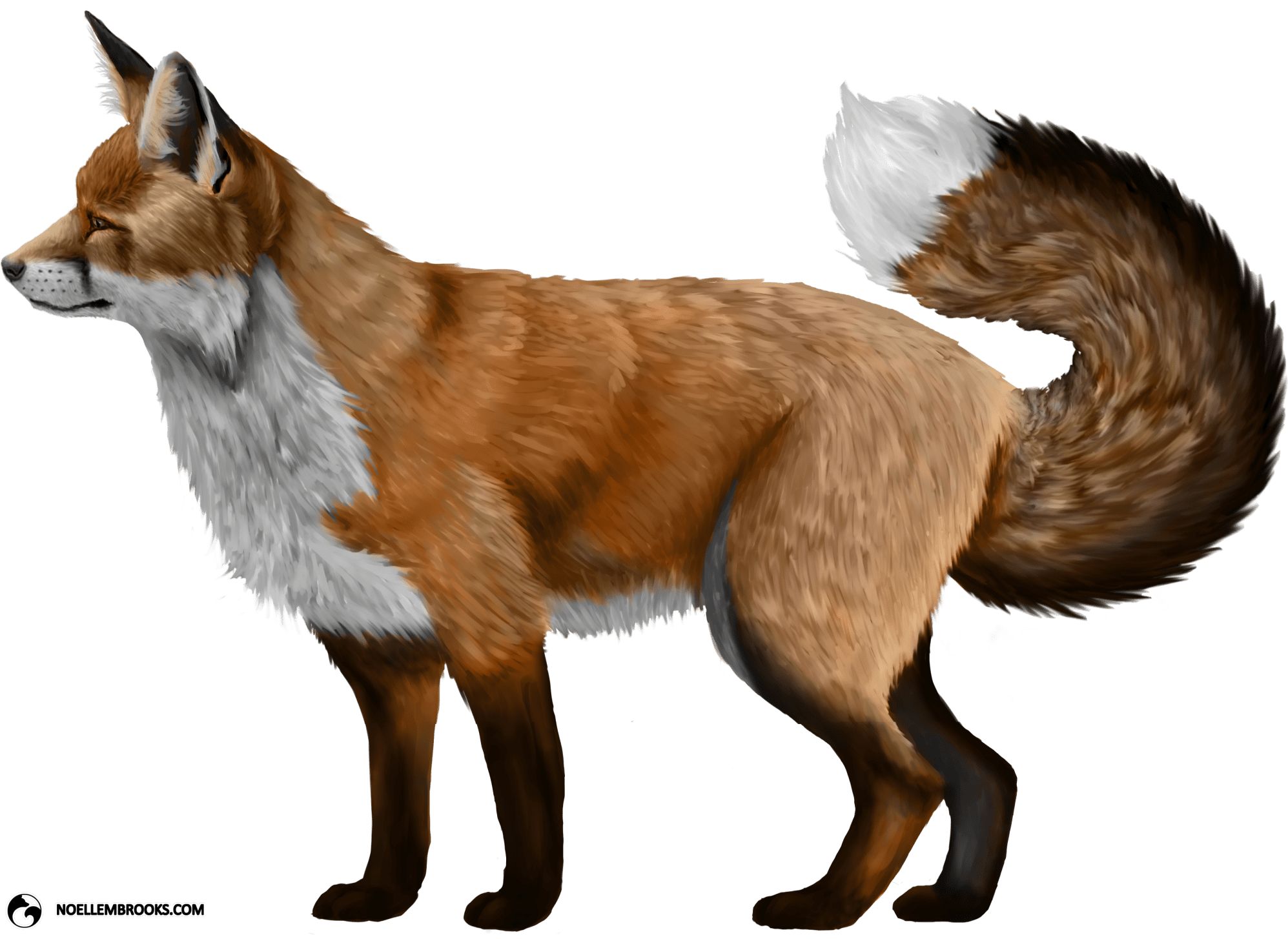 Most Desired Pet Fox Based on Most Frequent Participant Response to Individual Traits