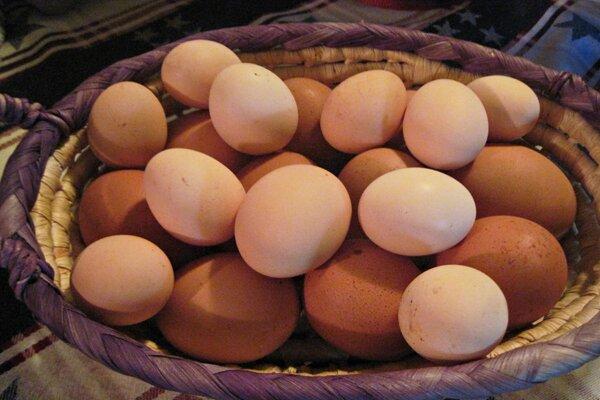 Organic Farm Eggs:Raise Your Own Chickens