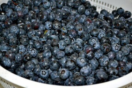 Blueberries from Summer