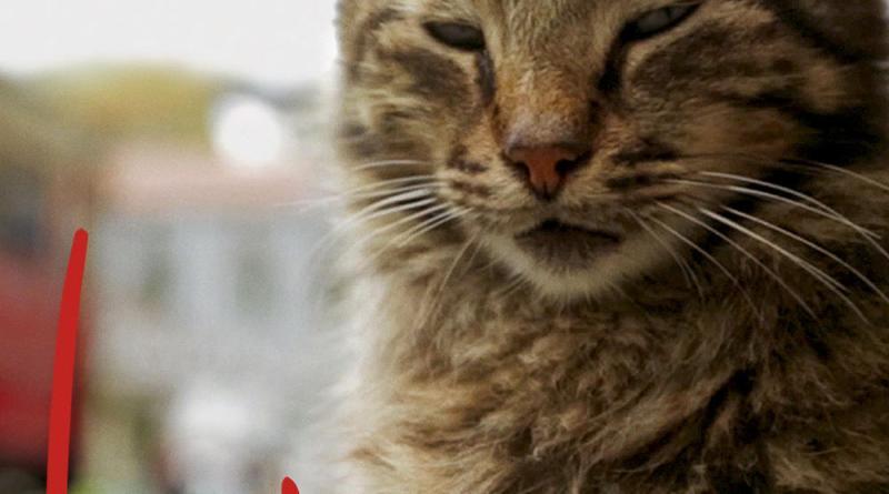 """Pósters de la película """"Kedi (Gatos de Estambul)"""""""