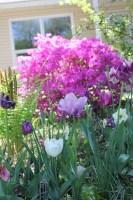 flowers    noexcusescrapbooking.com
