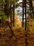 The forest is brighter this year than it was in 2011