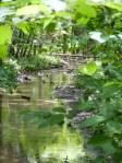 Two streams run through Water Works Brook park