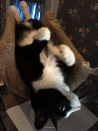 MiMi likes to be upside down.