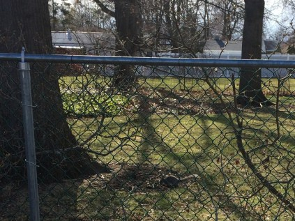 You have to look close, but the little squirrel became an orphan in March :(