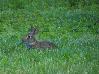 """""""This little guy is eating in my yard, but I don't mind."""""""
