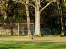 """""""Third base is covered. Where is everybody?"""""""