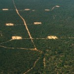 Pilot gas production site in the Pilliga Forest (photo: Tony Pickard)