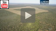 ABC News Queensland reported: Bulldozers destroy Olive Grove forest after Newman Govt approval.