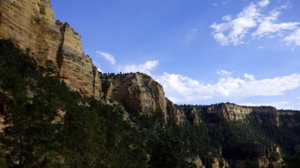 Looking up at canyon walls