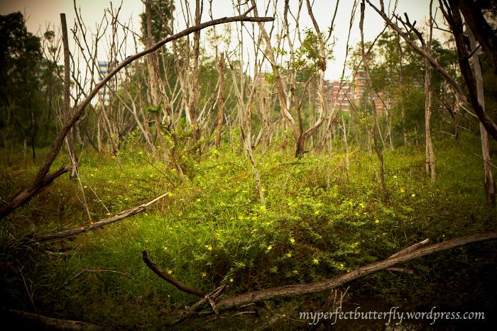 nowhere, eco garden
