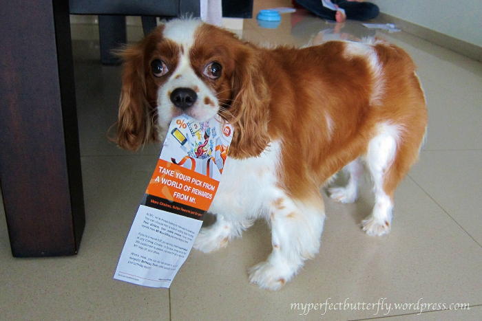 img 1016 1 Living With The Cavalier King Charles Spaniel Jamie Chan
