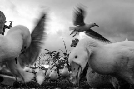 Birds, feeding, eating