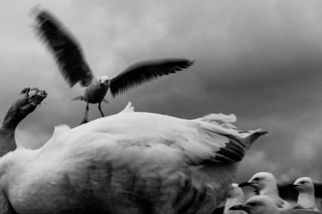 seagulls at the great ocean road