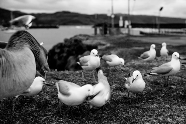 Monochrome seagulls at the great ocean road. Images by Jamie Chan of No Foreign Lands