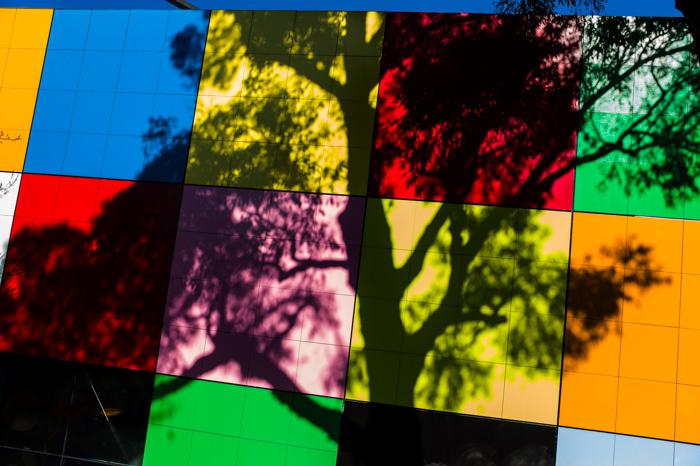 Carlton, Tree, Shadow, Melbourne, Gardens