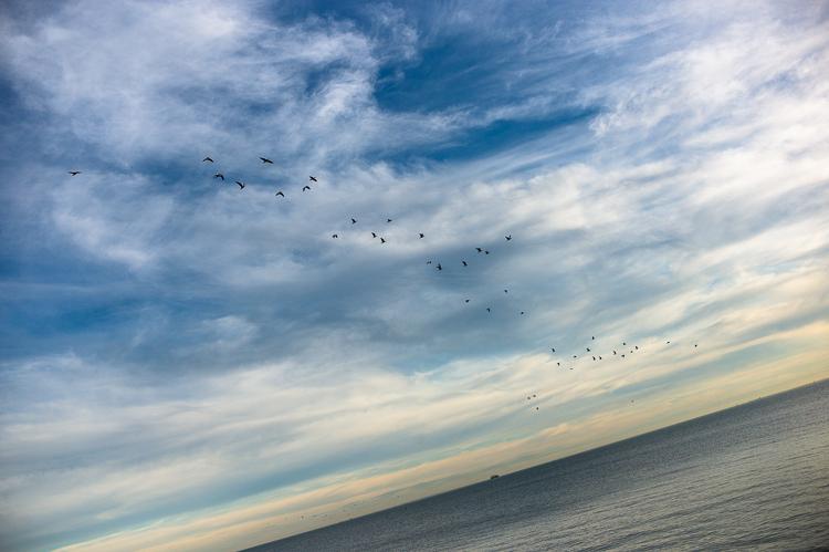 Jamie Chan, Leica, Travel Blog, Melbourne, St Kilda, birds, ocean
