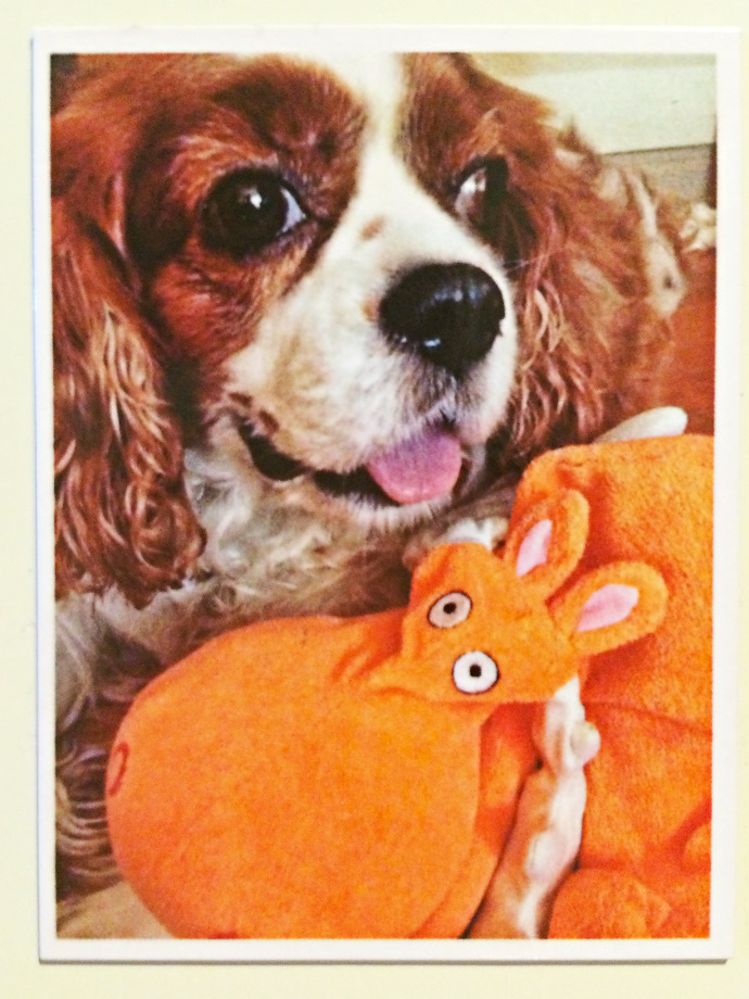 PicStick, Fridge Magnet, Jamie Chan, Shanghai, Australia, Blogger, No Foreign Lands, Cavalier King Charles Spaniel