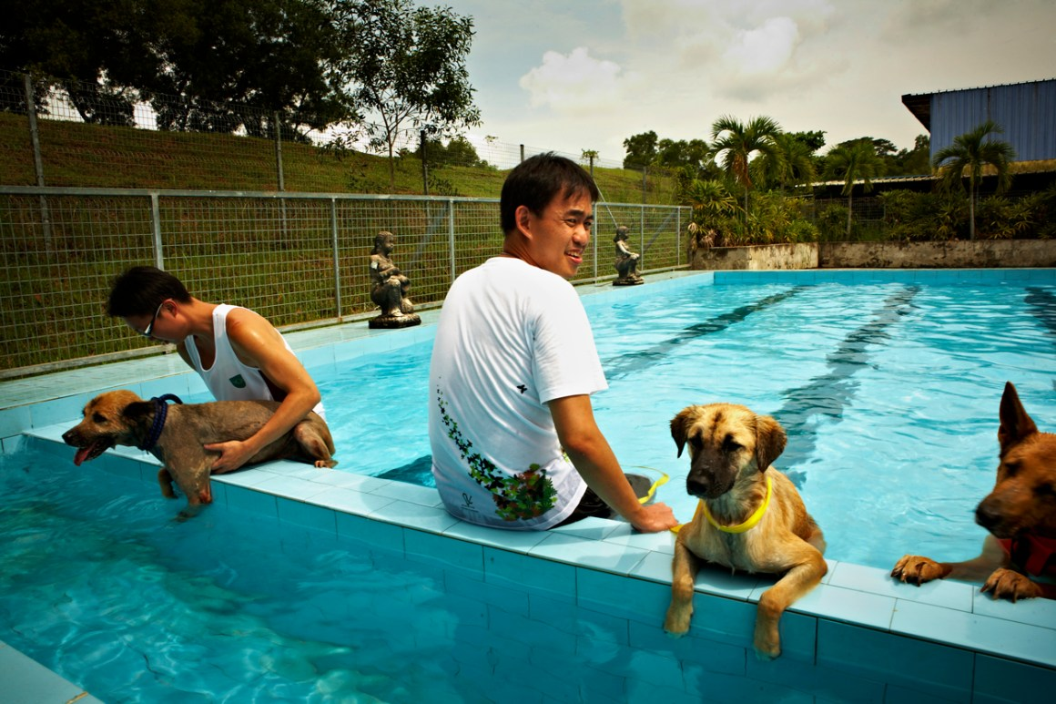 Youth Shooting Home, Jamie Chan, The story behind, Animal Shelter, dog, swimming pool, Singapore