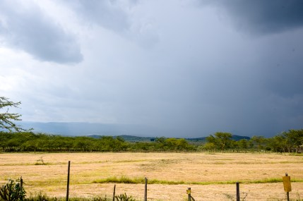 Dark clouds over a golden field in Kenya