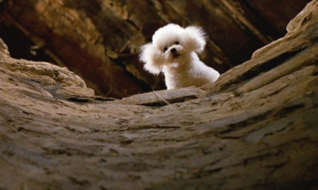 Hellish Hounds: Counting Down Horror's 10 Best Pups