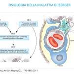 fisiologia delle malattia di berger