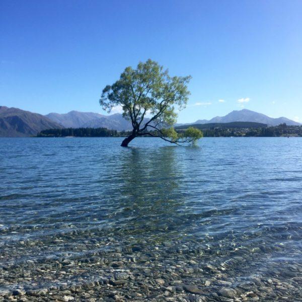 The Tree, Lake Wanaka, Otago, New Zealand