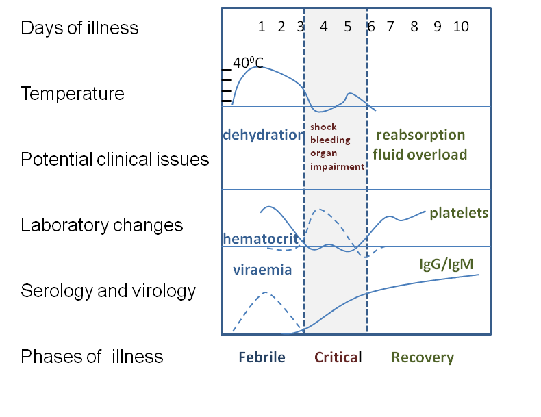 Timeline and course chart of dengue fever symptoms