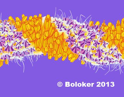 Judd Boloker Hawaiian lei print cigar flower small