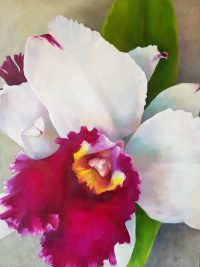"Lauren Salm Spanish Dancer Orchid Print on Canvas 22"" x 16"""