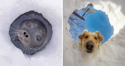 seals-look-like-dogs-2-574d4edb0c381__880