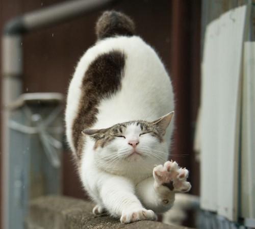 tokyo-stray-cat-photography-busanyan-masayuki-oki-japan-a50