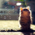 困っちゃうくらいかわいすぎる子猫ちゃん特集!