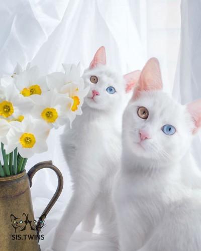 worlds-most-beautiful-cats-26-57fb7bdcc5009__700