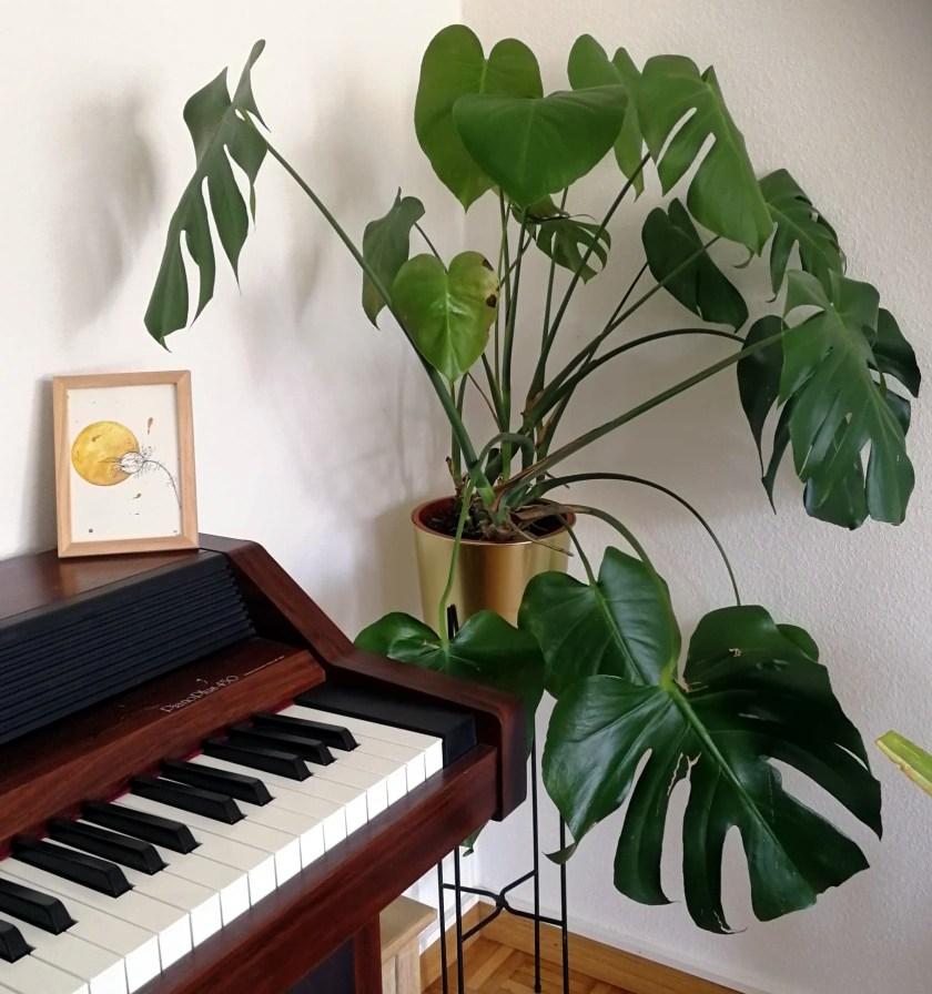 Aquarelle arachnoïde nigelle monstre planète plante mlam noiram marion-lorraine poncet piano