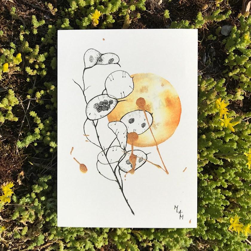 Aquarelle Soleil d'automne monnaie du pape mlam noiram marion-lorraine poncet planète plante carte